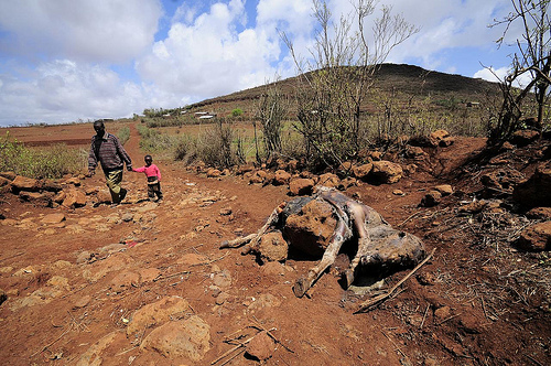 Livestock deaths in Kenya as a result of prolonged droughts